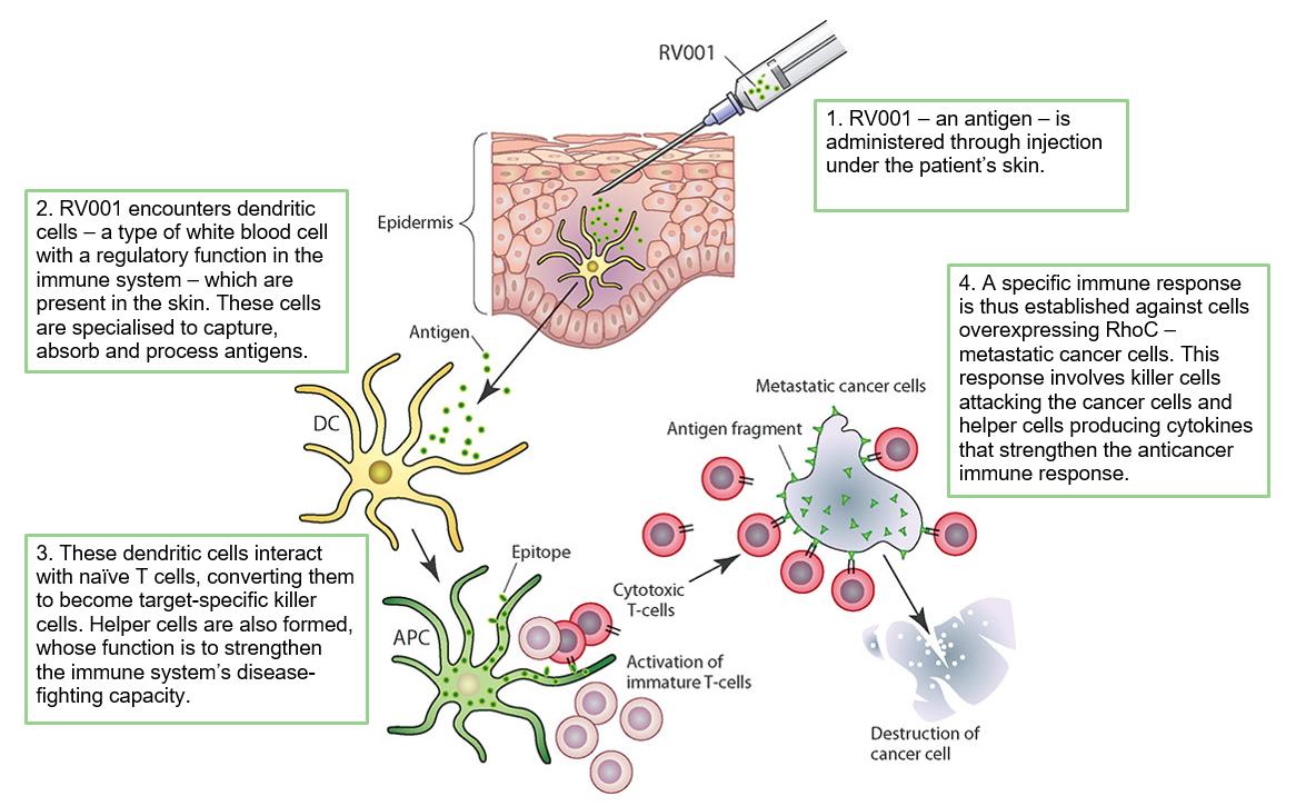 RhoVac - Stopping metastasis in its tracks • Edison